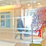 Know your brain-How to keep it healthy as you age